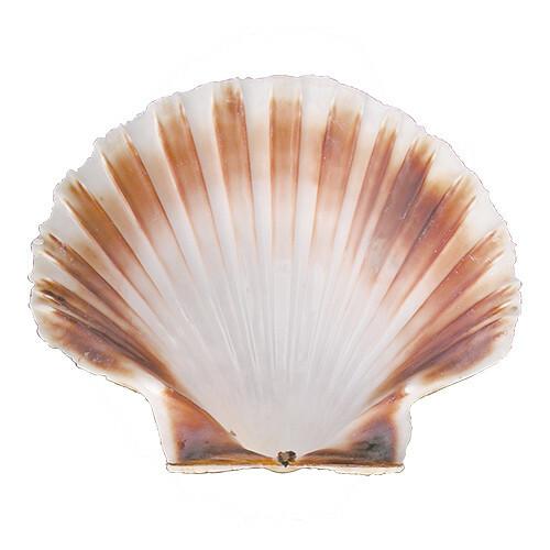 oesterschelp Ø 120 cm